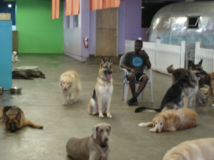 Dog Daycare Geneva, Florida