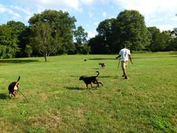 Dog Training Orange City