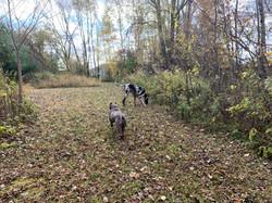 Off Leash Dog Training Green Bay