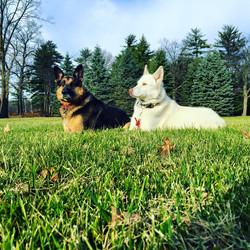 Green Bay Dog Training