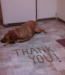 Separation Anxiety Dog Training