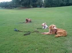 Edgewater Florida Dogs