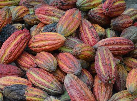Ceremonial Cacao - Sacred Plant Medicine of the Divine Feminine