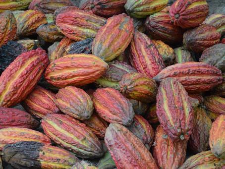 Ceremonial Cacao - Heart Medicine