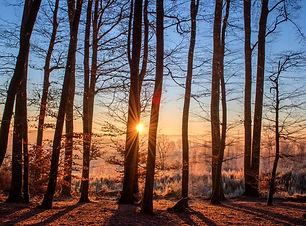 forest-1950402_1920.jpg