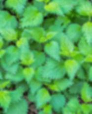plant-3341475_1920.jpg