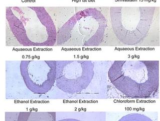 AZIONE PROTETTIVA DI ESTRATTI DI BARDANA (Arctium lappa radix) DA ATEROSCLEROSI INDOTTA DA DIETE RIC