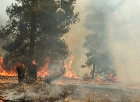 Plantaciones forestales: falsa solución al cambio climático