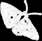 mariposa blanca2.png