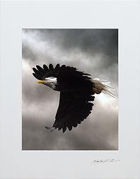Eagle Storm.jpg