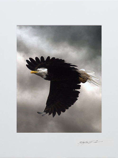 Bald Eagle, with storm clouds, 5x7 Print matted to 8x10