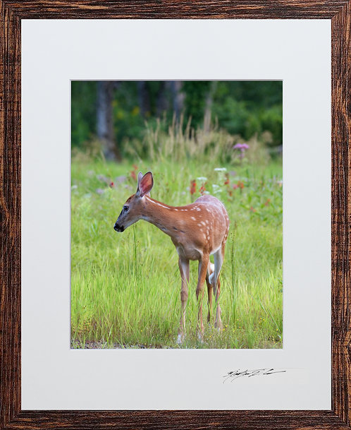 Matted and framed Bambi, taken in Milo, Maine