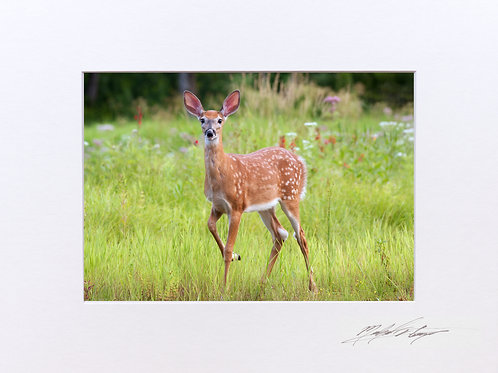 A Fawn taken in Milo, Maine, 5x7 Print matted to 8x10