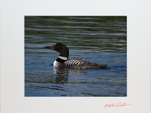 Loon on Long Pond, 8x10 Lustre Matte Print, matted to 11x14