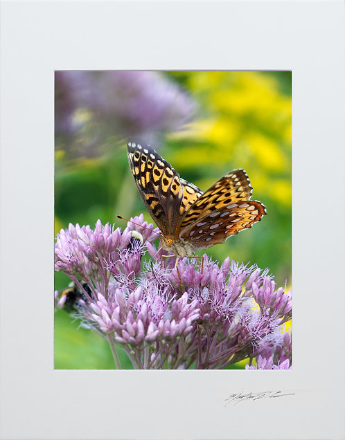 Great Spangled Fritillary Butterfly, taken in Milo, Maine