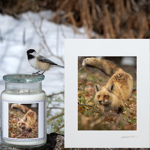 Fox Candle & Print Gift Package, FREE SHIPPING INCLUDED