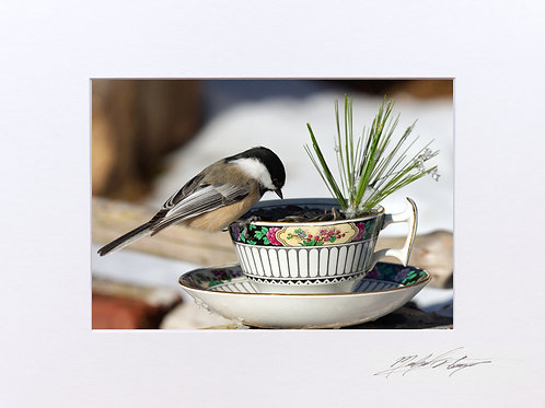 Teacup Chickadee, 5x7 Print matted to 8x10