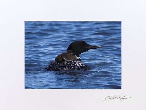 Momma and Baby Loon, 5x7 Print matted to 8x10