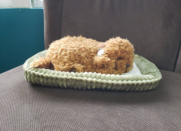 Companion Pet - Dog in Bed