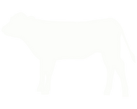 calf%20white_edited.png