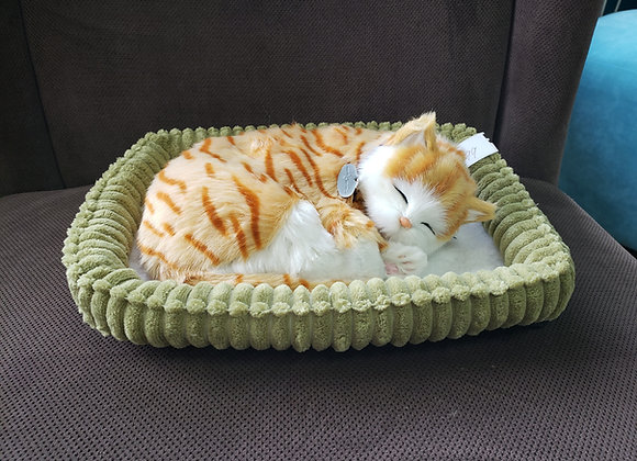 Companion Pet - Cat in Bed