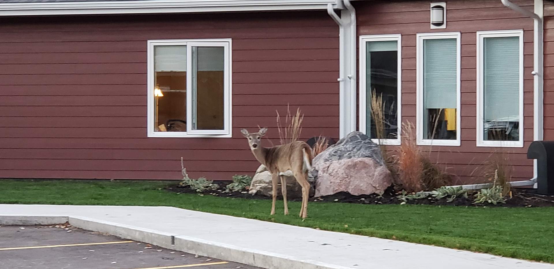 Ironwood Deer in front of home.jpg