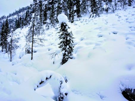 פינלנד - רקע