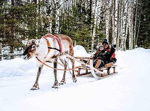 Lapland_Adult.jpg