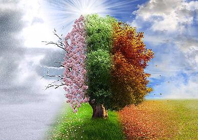 seasons of grief.jpg
