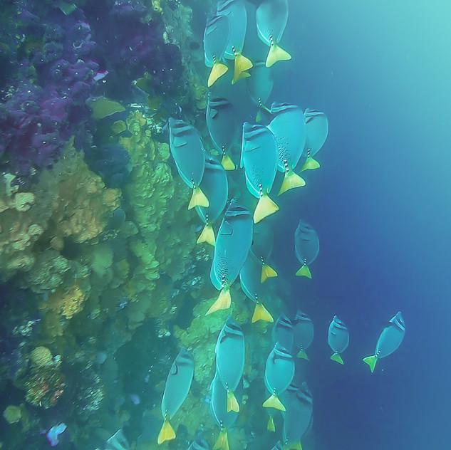 Diving at Kicker Rock