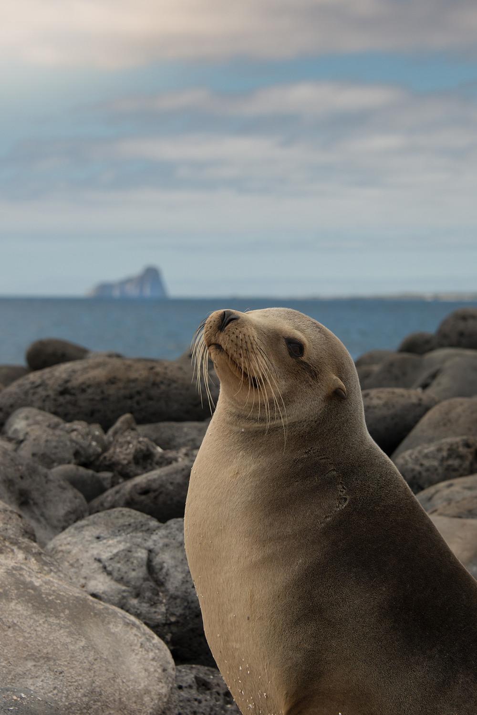 Sea Lion Basking on the rocks (Kicker rocks in the distance)