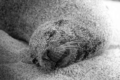 'Sand or Sea Lion'