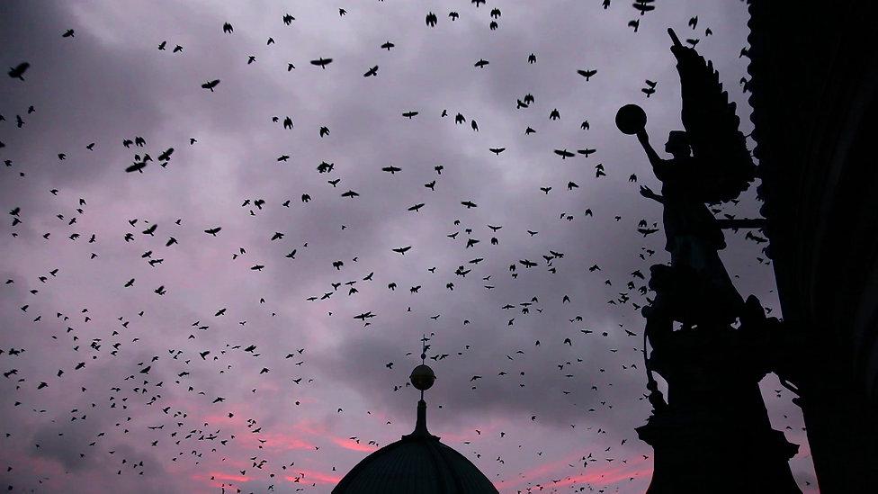 Dan Hudson Winter Crows