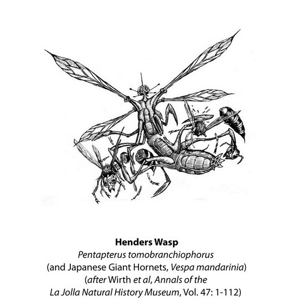 Henders Wasp book etching