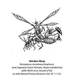 Henders Wasp book etching