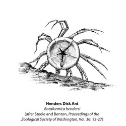 Disk Ant book etching