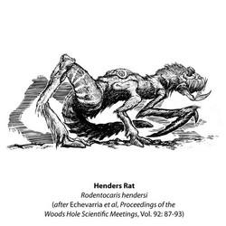 Henders Rat book etching