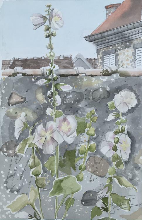 Le mur aux roses trémières
