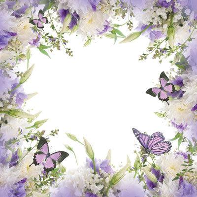 Butterfly Garden EAV-894