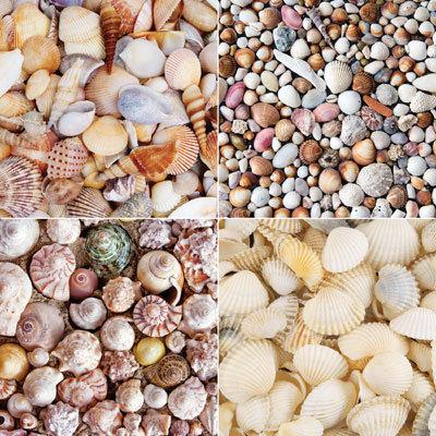 Seashells Tray EAV-905