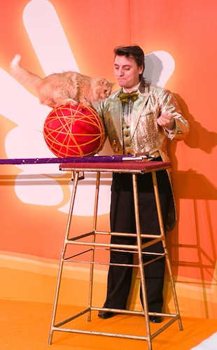 цирковой номер с кошками