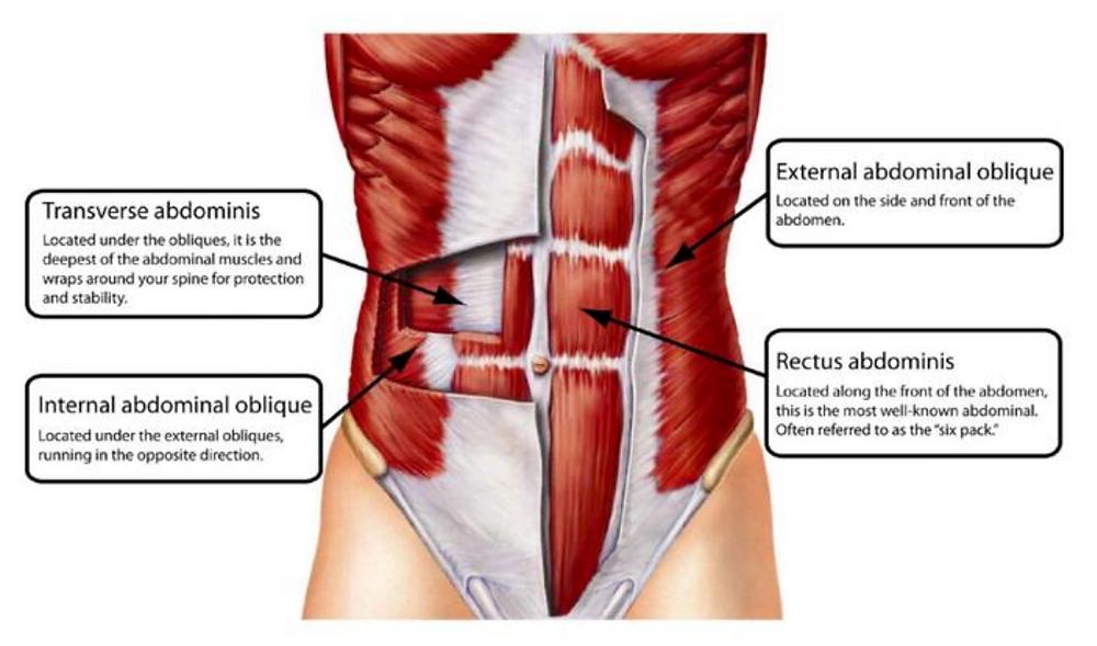 Illustrasjonen viser magemusklene i lag.