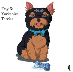 Day3: Yorkshire Terrier