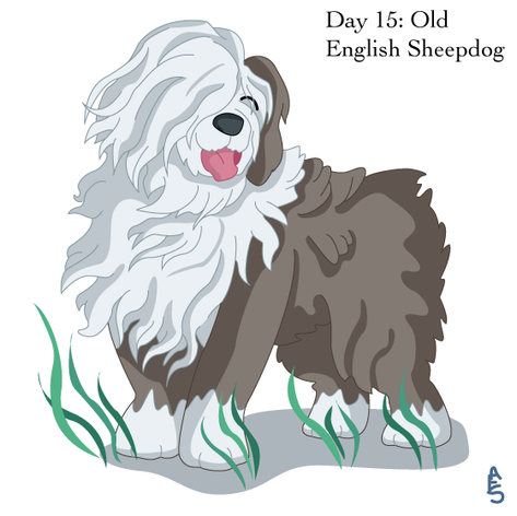 Day15: Old English Sheepdog