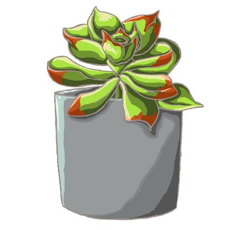 Plant Pot 4