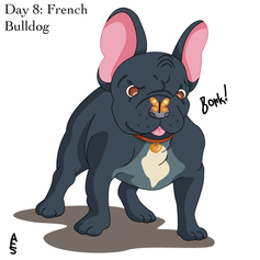 Day8: French Bulldog.