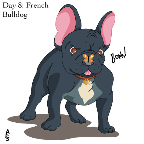 Day8: French Bulldog.