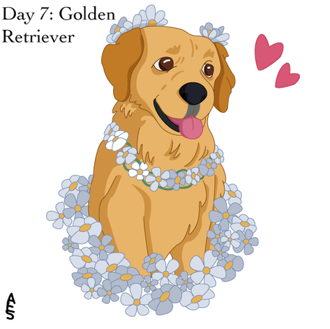 Day7: Golden Retriever