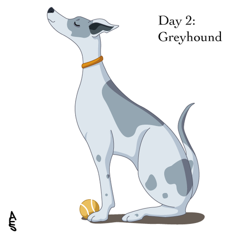 Greyhound (Barch Challenge)
