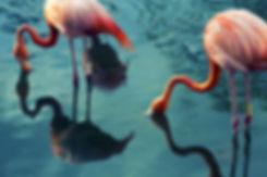 Holistic, lifestyle, health, nutriton, recipes, flamingos
